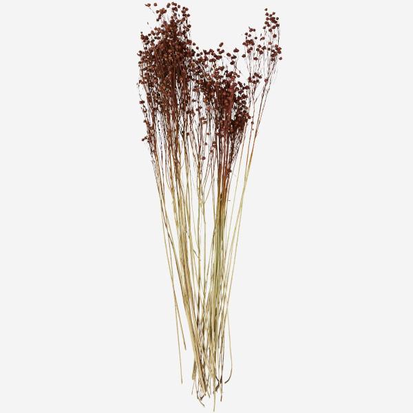 Trockenblumen Linum Usitatissimum von Madam Stoltz