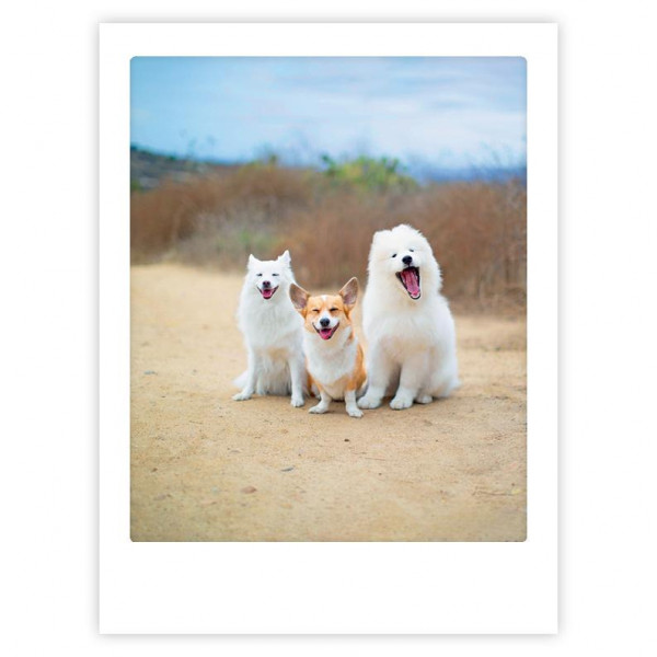"""Poster """"Friends for life"""" von Pickmotion"""