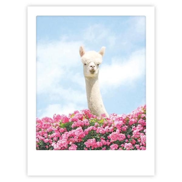 "Poster ""Hello there lama"" von Pickmotion"